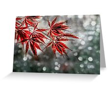 Japanese Red Maple Leaves  Greeting Card