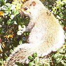 Squirrel 2 by brendan harkom
