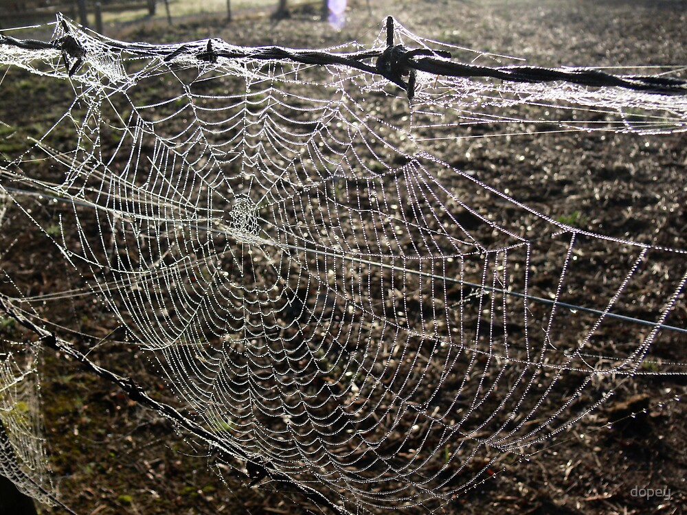 web II by dopey