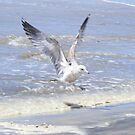 Incoming ~ Imperial Beach, California by Marie Sharp