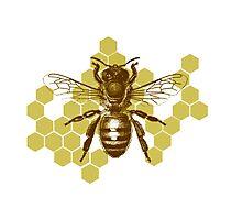 Bumble Hive Photographic Print