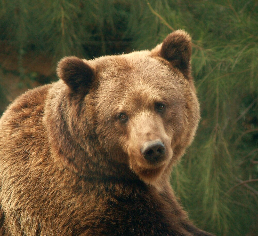 Bear by pbdz22