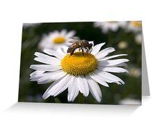 Pollen Aware 02 Greeting Card