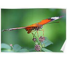 Orange Butterfly 1 Poster