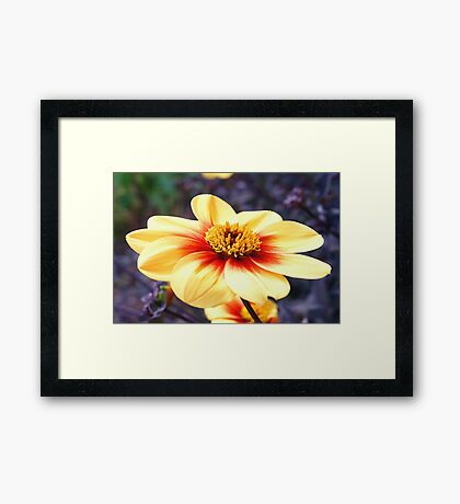Mysterious Colours Framed Print