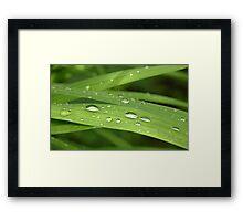 Jewels on a leaf Framed Print