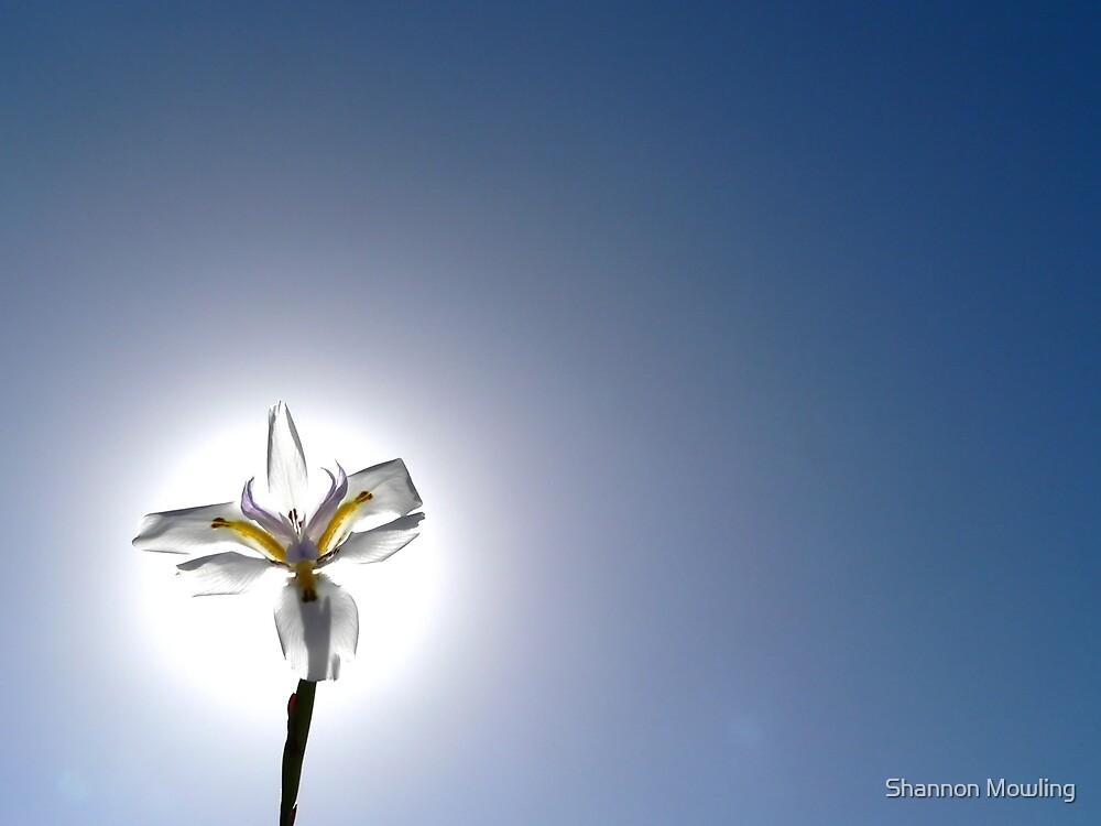 Sun/Flower by Shannon Mowling