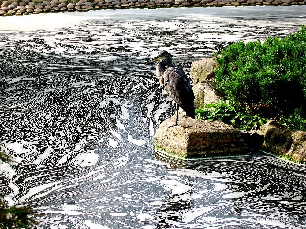 Japanese Garden Pond by cameron barnett