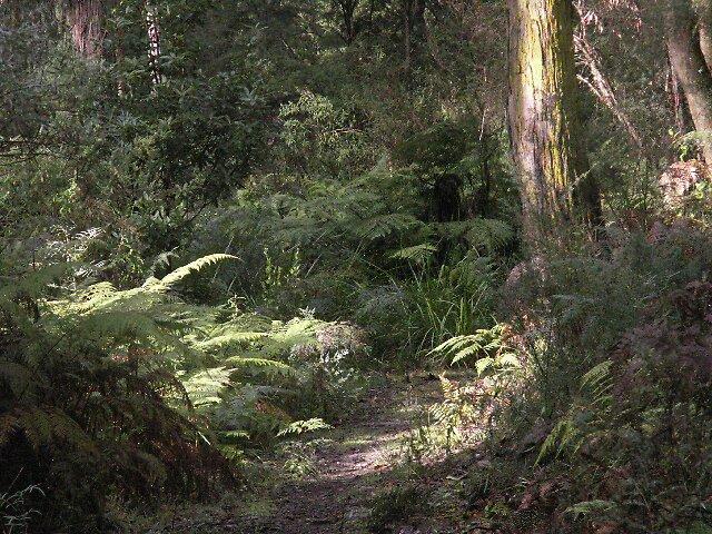 rainforest by Grace  Amore
