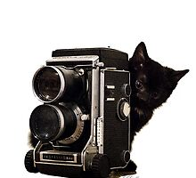 Feline Photographer by J. L. Gould