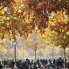 Autumn Colors, 9/11 Memorial and Park, Lower Manhattan, New York City by lenspiro