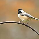Chickadee by Debbie  Roberts