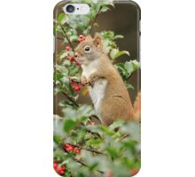 Squirrel in Holly iPhone Case/Skin