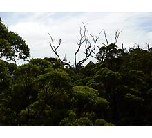 Above the canopy Photographic Print