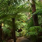 Tree Ferns, Otway Ranges by Joe Mortelliti