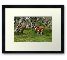 Mountain Cattle, Victorian High Country Framed Print