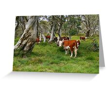 Mountain Cattle, Victorian High Country Greeting Card