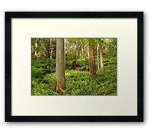 Ferns,Haunted Stream High Country Framed Print