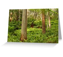 Ferns,Haunted Stream High Country Greeting Card
