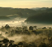 Valley Fog,Dollar, Gippsland by Joe Mortelliti