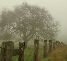 Foggy Morning, Macedon Ranges by Joe Mortelliti