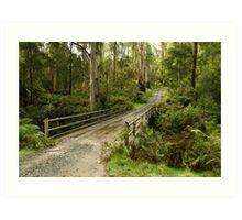 Bridge Track, Otway Ranges Art Print