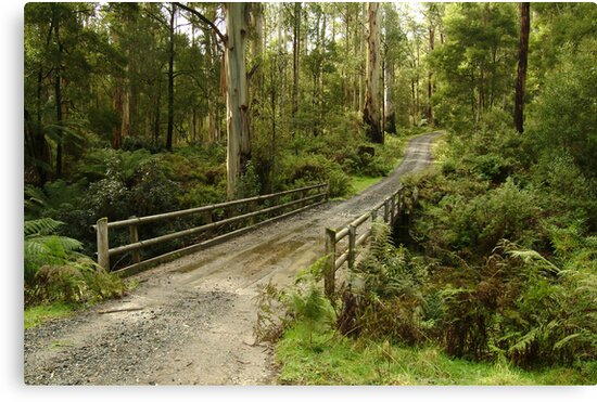 Bridge Track, Otway Ranges by Joe Mortelliti