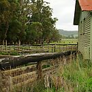 Shearing Shed by Joe  Mortelliti