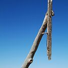 Old Telegraph Pole, Mallee rustic timber by Joe Mortelliti