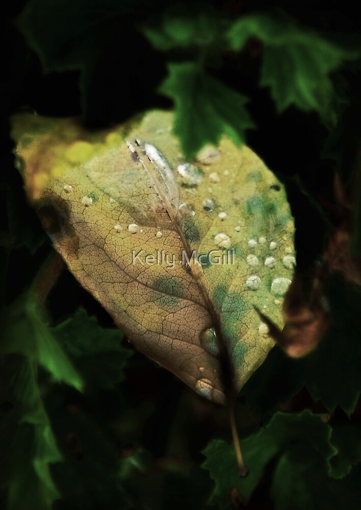 The Leaf by Kelly McGill