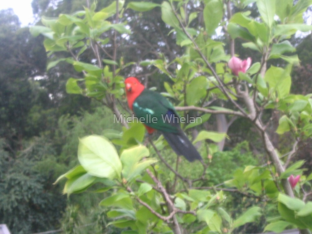 king parrot in tree by Michelle Whelan