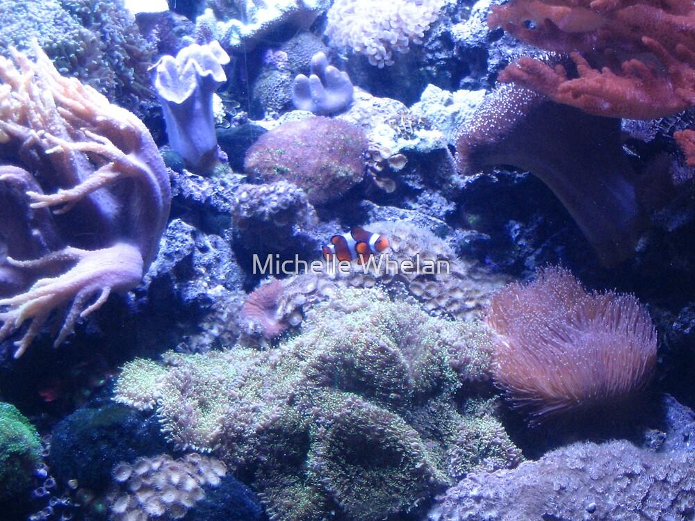 clown fish by Michelle Whelan