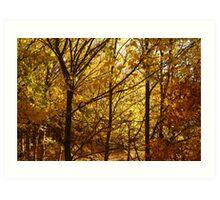 Autumn at Clunes Art Print