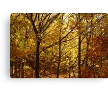 Autumn at Clunes Canvas Print