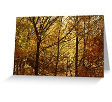 Autumn at Clunes Greeting Card