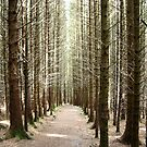 Forest on the Isle of Skye by Lindamell