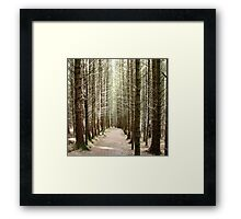 Forest on the Isle of Skye Framed Print