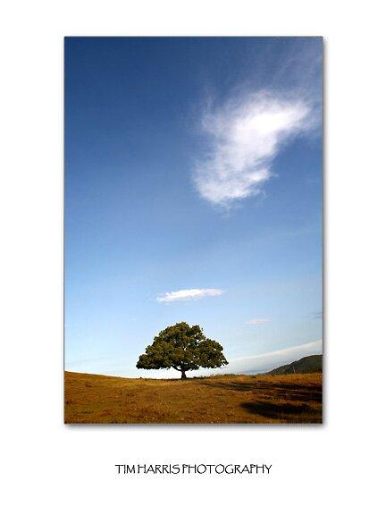 The last tree by suspectim
