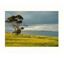 Golden Fields, Bellarine Peninsula Art Print