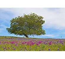 Colorful Meadow Photographic Print