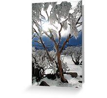 Snowgums 2 Greeting Card