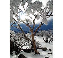 Snowgums 2 Photographic Print