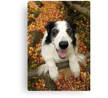 Cute Collie in Autumn Canvas Print