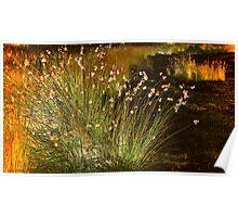 Radiant Reeds Poster