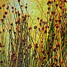 Grasses by mawaho