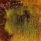 Fairy Lights by mawaho