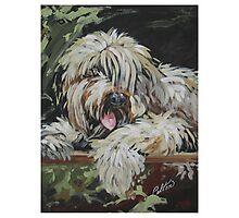 Pet Portrait  Photographic Print