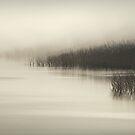 Morning fog by kristin diemer