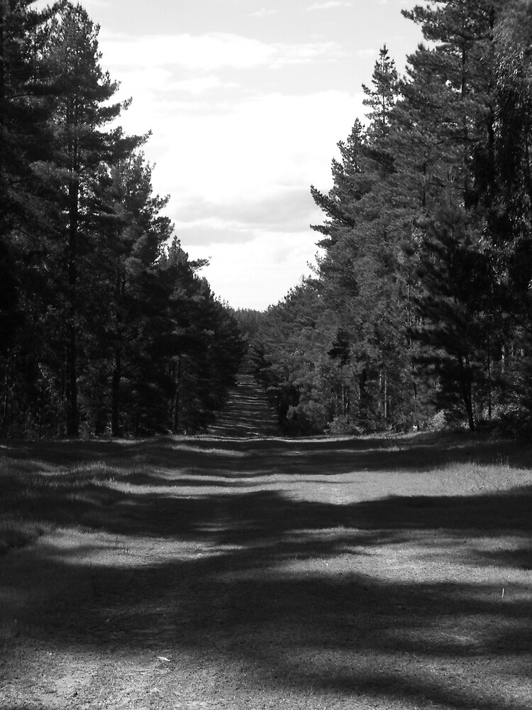 forest by Femke