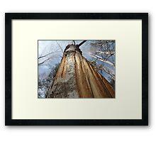 Moose Maple Framed Print